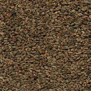 نبات النانخة أو النخوة Ajwain